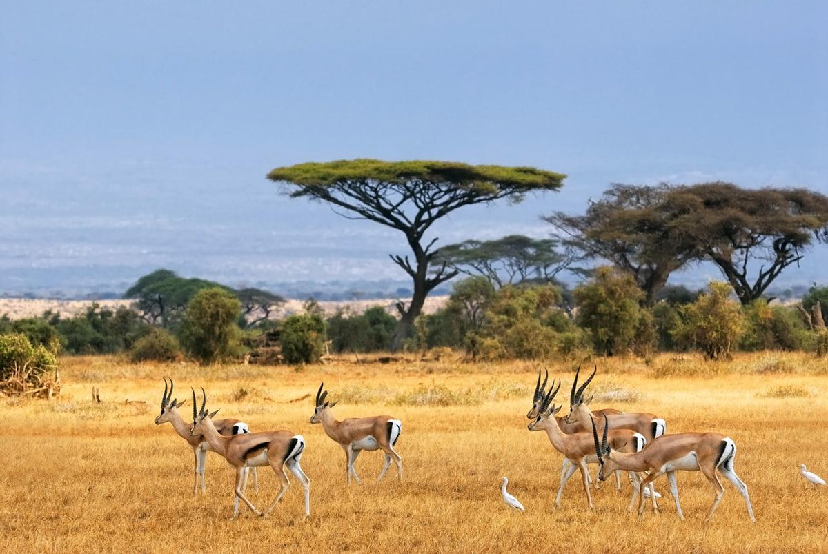 pourquoi faire un stage en afrique du sud