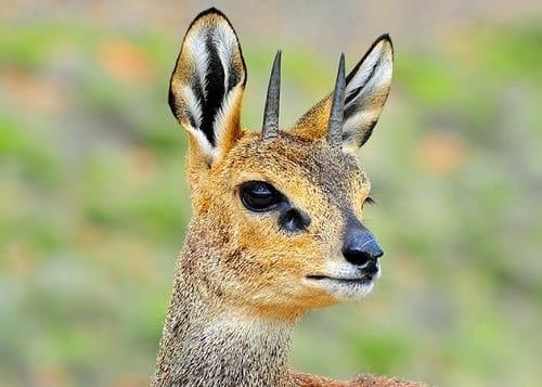 Parc national du Karoo - Afrique du Sud