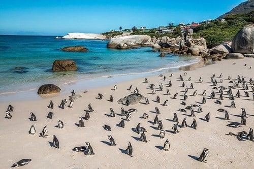 Simon's Town - Afrique du Sud