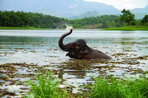 Découvrir le Laos