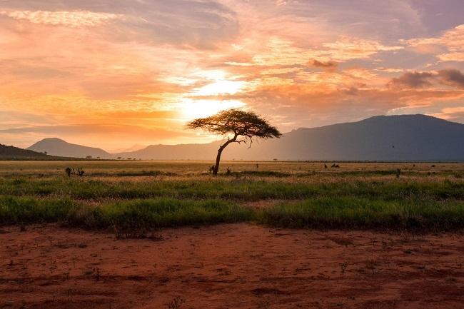 Quelle est la rémunération du VIE en Afrique ?