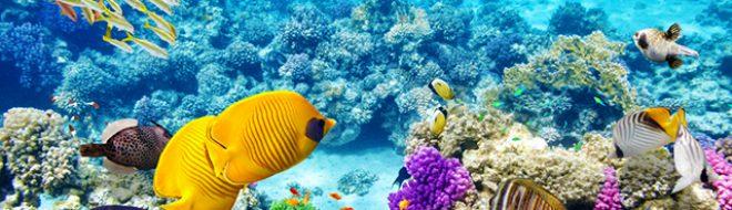 Les plus belles barrières de corail de la planète à découvrir pendant ton stage !