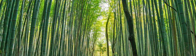 Dossier Japon – Partie III – Kyoto, l'ancienne capitale