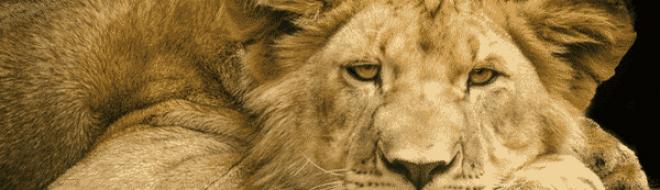 Top 6 des plus beaux pays pour faire un safari