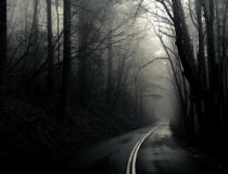 Les forêts les plus hantées du monde à découvrir pour Halloween !