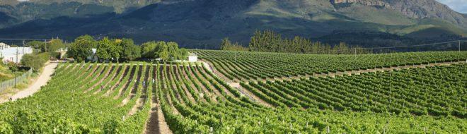 Destination Afrique du Sud pour ton stage à l'étranger – Partie I – Wellington