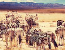 Les animaux en voie de disparition à observer pendant ton stage à l'étranger !