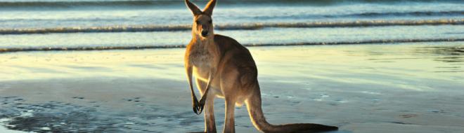Stage en Australie : le point sur la rémunération !